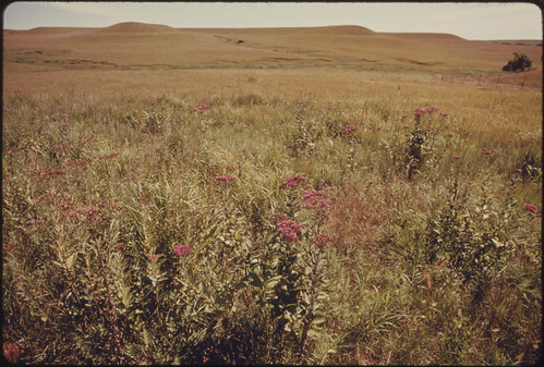 A View of a Portion of Konza Prairie, 1,000 Acres of Virgin Tallgrass Prairie near Manhattan, Kansas...08/1974 | by The U.S. National Archives