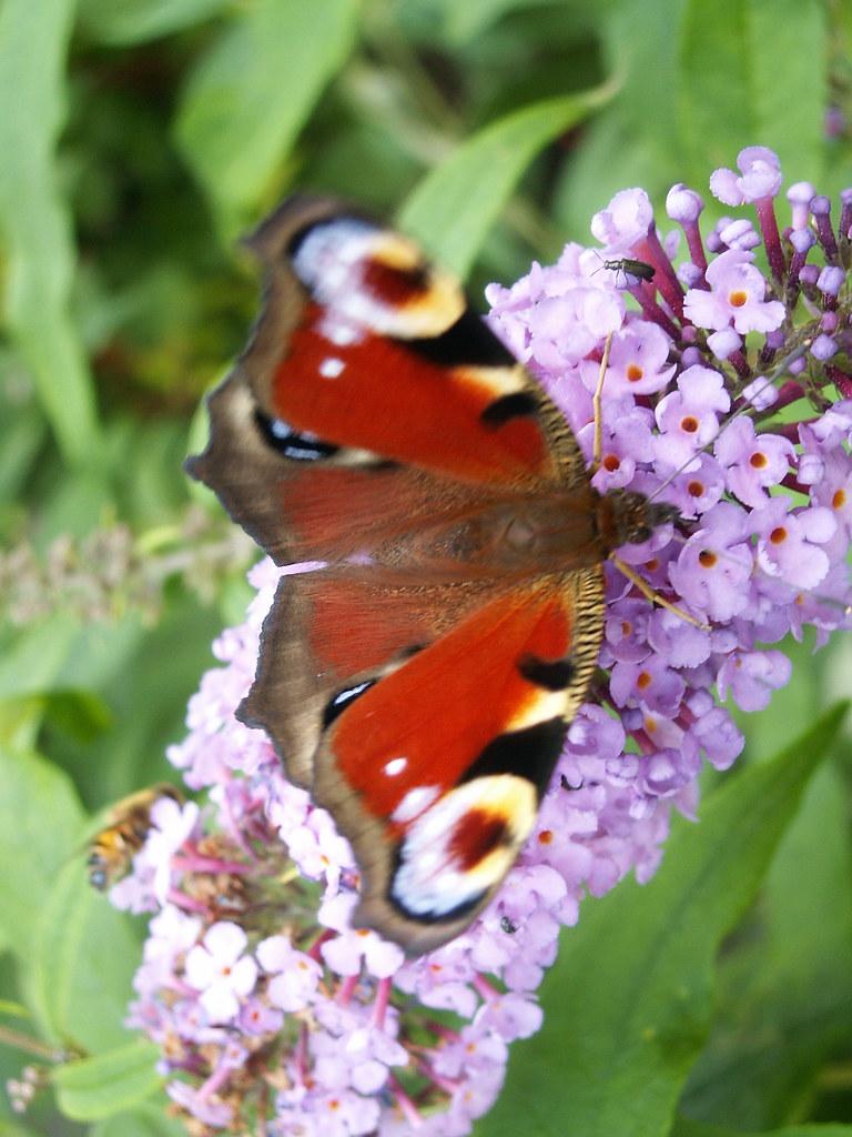 Der Schmetterling bringt Glück, sein Leben frey zu leben. Ein Schmetterling in seiner Hand, wenige Tage sind zum Fliegen dir erlaubt, was hilft die Grausamkeit, die mir auch diese raubt, was weißt du von der Blumen Schmuck wird nicht durch mich versehrt, das ist alles, was mich nährt in Dresden 141