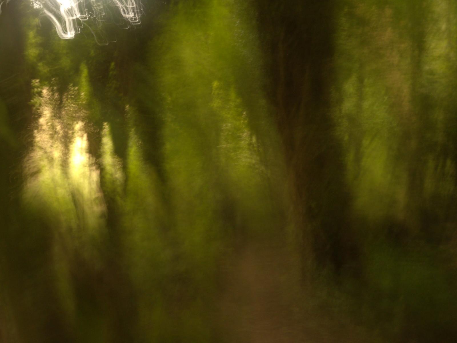 Trees Hassocks to Brighton