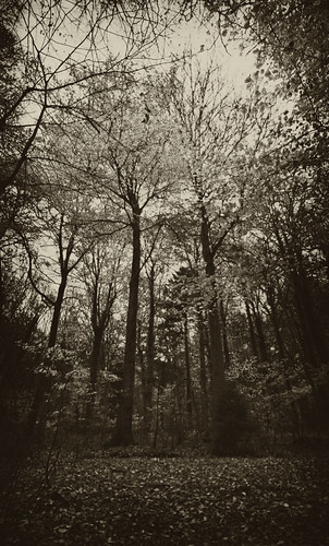 If You Go Down To The Woods Today | by Hexagoneye Photography