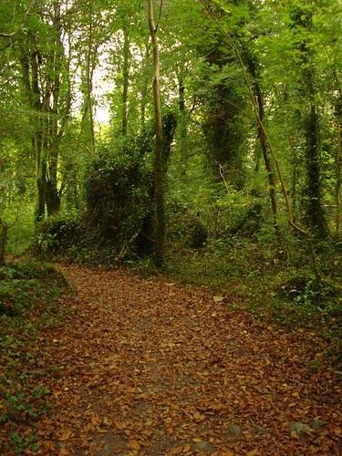 ireland woodland 2009