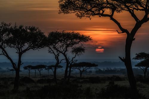 tree sunrise acaciatrees masaimara kenya eastafrica africa landscape