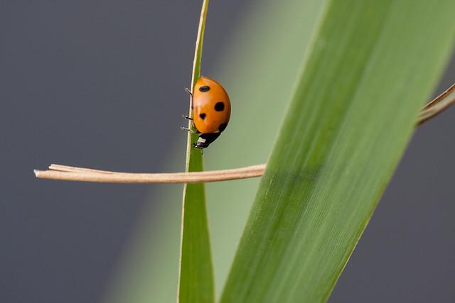 Ladybug #Love
