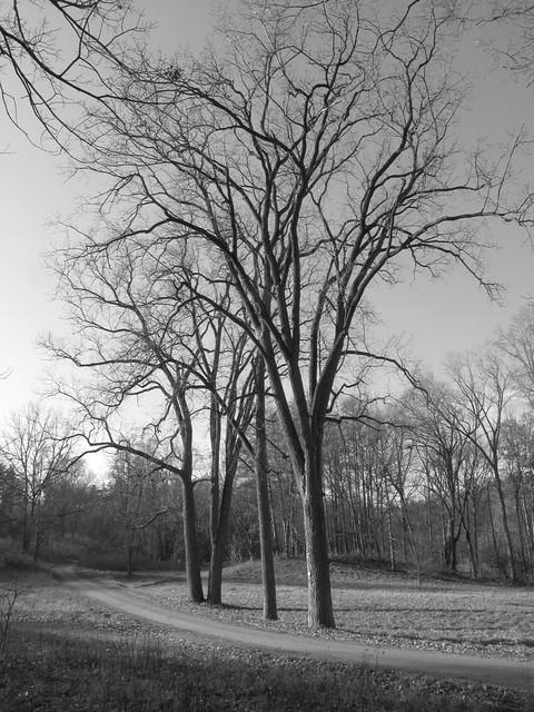 Nichols Arboretum, University of Michigan, Ann Arbor, MI