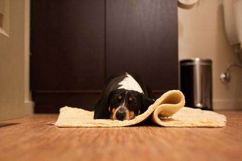 Bathroom Dog | by KeriFlur