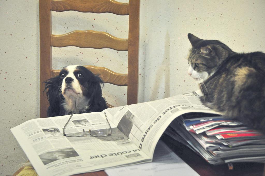 Le Chien et le Chat