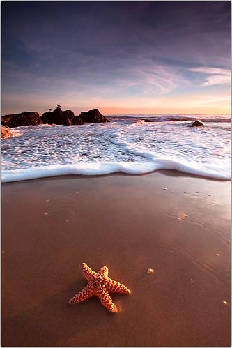 sunset beach water sand bravo flickr surf waves starfish pch pacificocean discostarfish leocarrillo leocarrillostatebeach absolutelyrandomlyplacedstarfish nostarfishwereinjuredinthemakingofthispicture