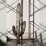 Airport Cactus