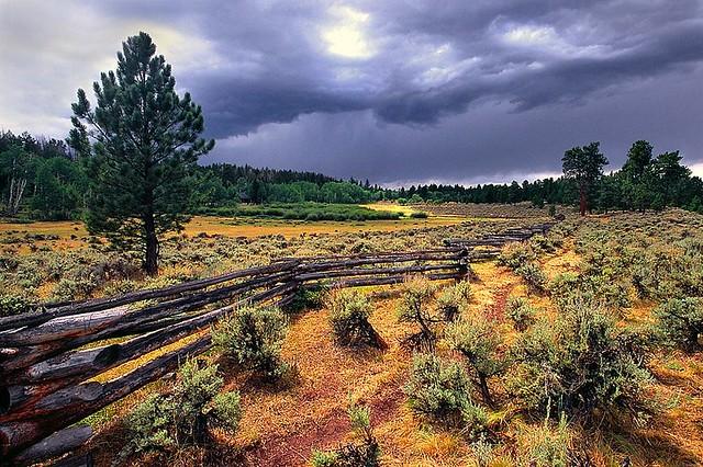 Stormy Meadow