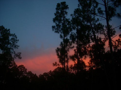 pink blue trees sunset sky color silhouette clouds florida fl