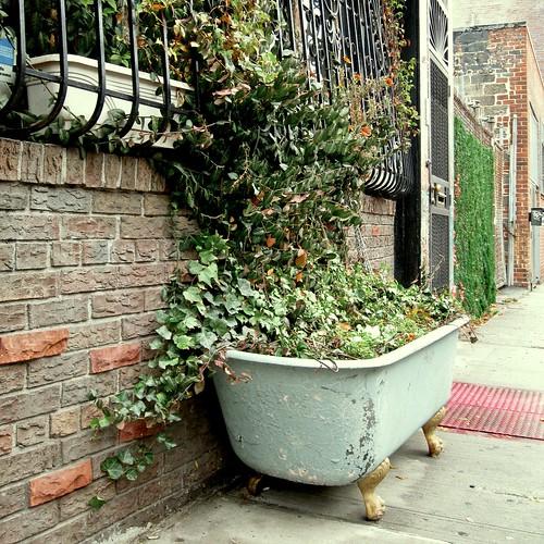 bathtub   by matthewb