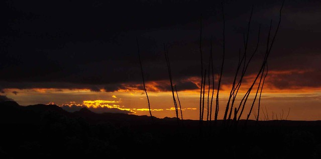 Sunrise with Ocotillos; San Pedro Valley, SE of San Manuel, AZ