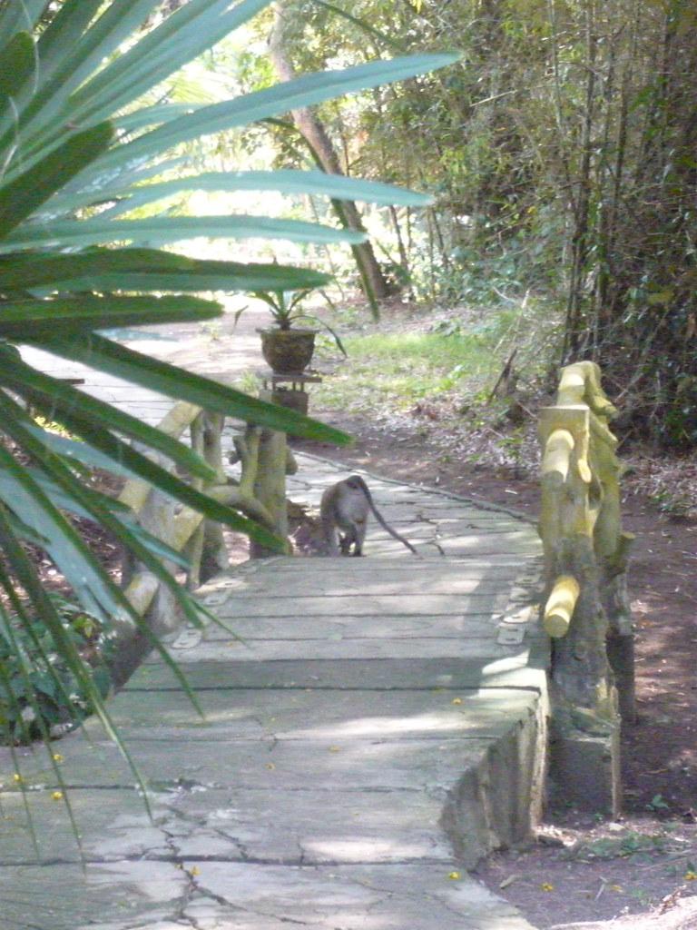 Amori De bridge monkey | sébb amori de la ragote | flickr