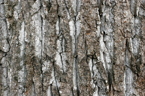 Rough Tree Bark | by GrungeTextures