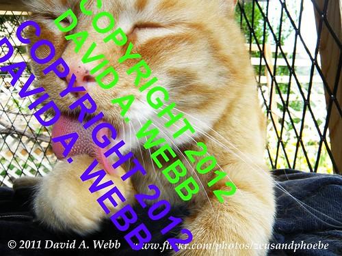 pink red summer orange usa pet white animal yellow tongue cat fur nose mackerel ginger utah paw feline chat tabby olympus whiskers zeus gato freckles provo tomcat 2011 cc100 catnipaddicts