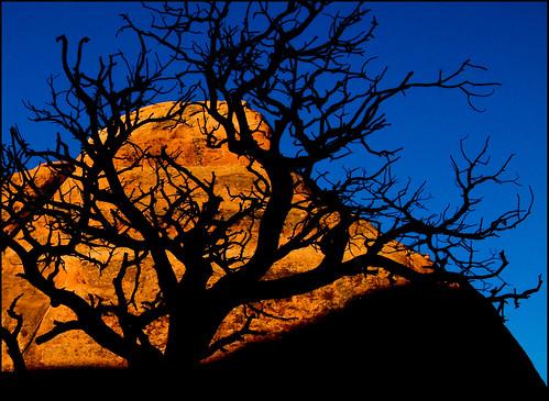 blue sky orange tree silhouette sunrise desert
