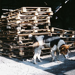 charcoal factory - dog