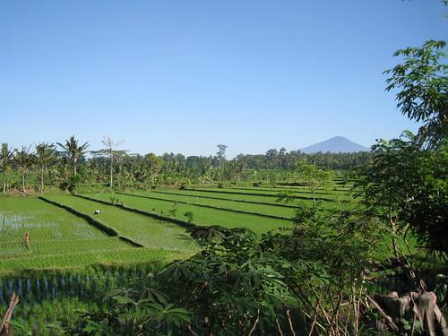 Walking through the Rice Paddies | by muzaktherapy