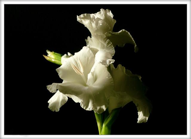 Descansa En Paz Mamárest In Peace Mom Parece Que Hac Flickr