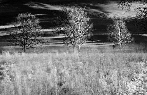 4 trees in a feild of tall grass blowing in the wind | by briphi