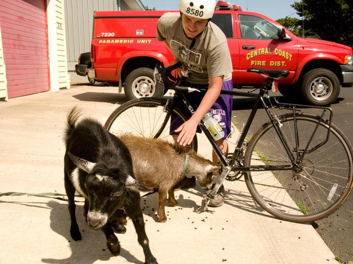 Yachats, Oregon Firehouse Goats
