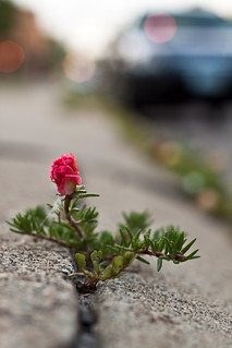 Sidewalk Pink | by KeriFlur