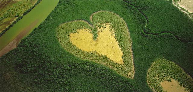 Landscape Heart Postcard