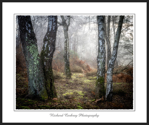 tree trees wood woodland fog sunrise southdowns westsussex landscape painterly art