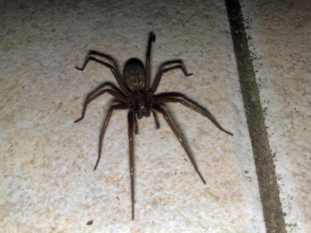 Spider | Spider on the kitchen floor | larsjuh | Flickr