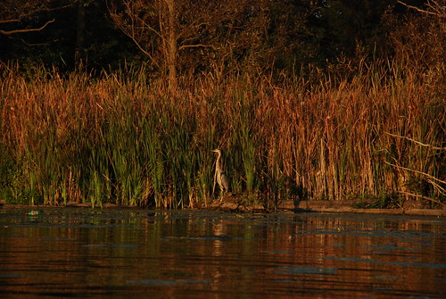 blue sunset heron great indiana elkhart stjosephriver