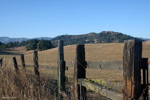 Decrepit Fence
