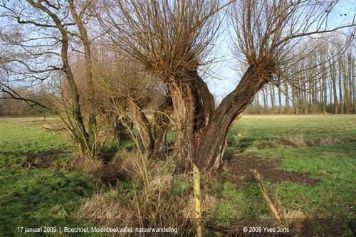 Boechout-Vremde, Molenbeekvallei, winterwandeling