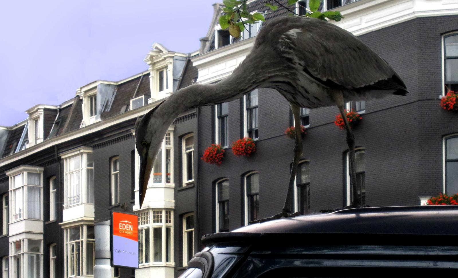 Amsterdam 567