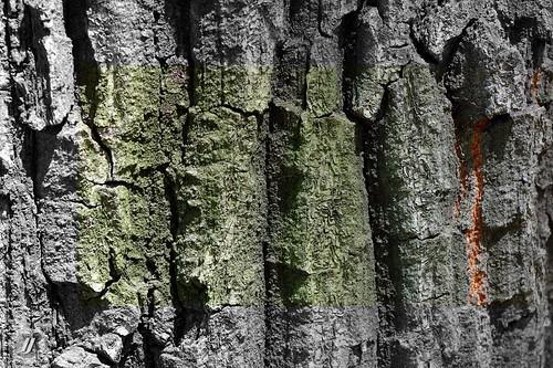 tree, texture 6 | by Salta 3N1