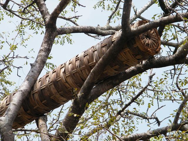 Bamboo hive