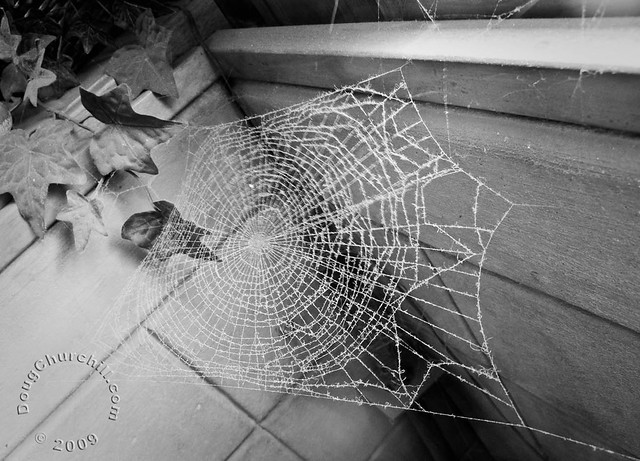 Day 367 • dusty web • 22 Dec 09