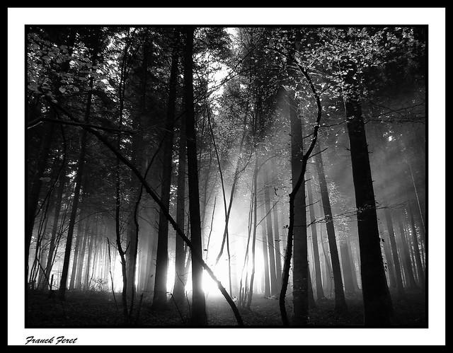 lumière dans la foret  ** light in the forest **