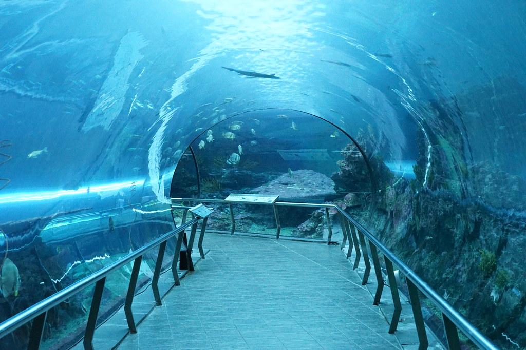 国立海洋生物博物館_42