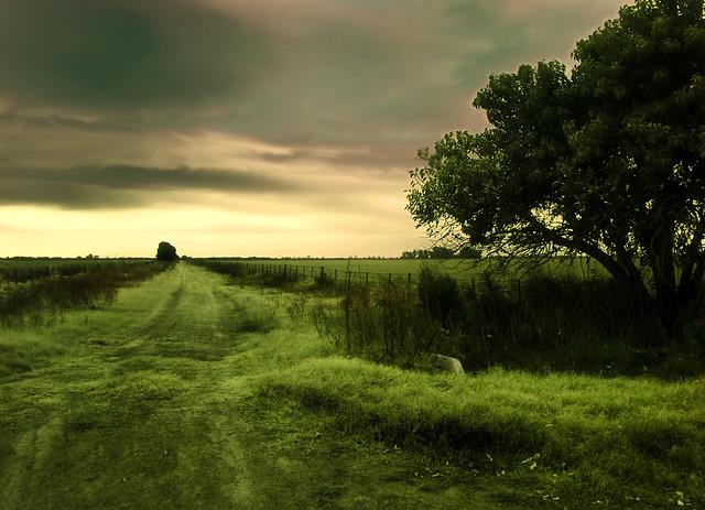 Verde esperanza / Green hope