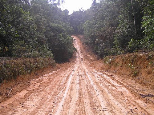 Tue, 06/06/2006 - 15:46 - Road to 25-ha plot. Credit: CTFS