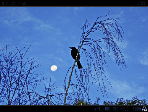 blue trees moon bird clouds geotagged interestingness silhouettes australia bluesky explore canberra raven explored inexplore aug31 narrabundah tomraven aravenimage q309 geo:lat=35339235 geo:lon=1491492
