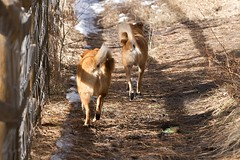 Photograph: Happy little dog butts