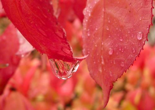 Light Autumn Drizzle
