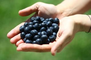 A handfull of bluekeh | by silkegb