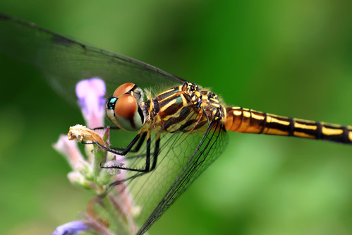 D like Dragonfly :)
