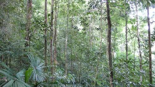 Thu, 03/13/2008 - 08:12 - Kuala Belalong Forest. Credit: CTFS