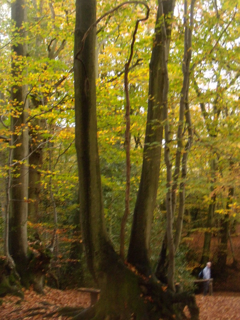 Autumn trees 8 Witley to Haslemere
