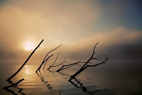 mist tree water silhouette fog clouds sunrise branches ripples canonef24105mmf4lisusm 5dmkii