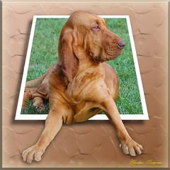 Bloodhound OOB