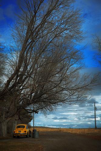 trees sky usa car yellow america unitedstates beetle idaho american trashcans vwbeetle hollister backroom